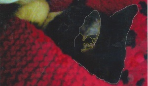 ET in Cat ear_RW in Calgary - ET skull in ear_02